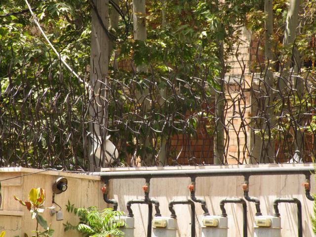 حفاظ شاخ گوزنی از نمای دور