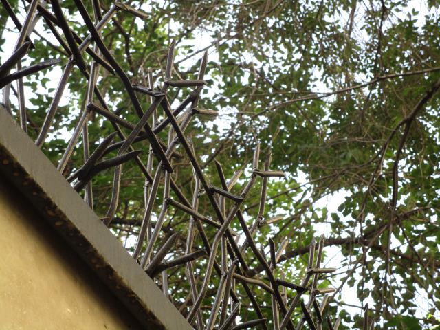 حفاظ شاخ گوزنی از نمای پایین