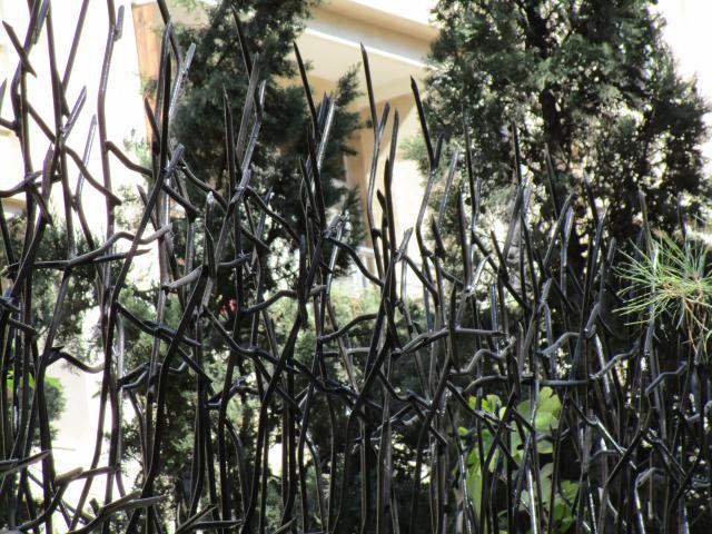 حفاظ شاخ گوزنی مشکی از نمای نزدیک