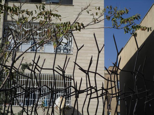 حفاظ شاخ گوزنی از نمای زوم