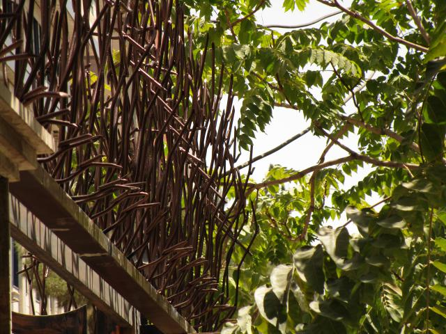 حفاظ شاخ گوزنی قهوه ای از نمای جانبی