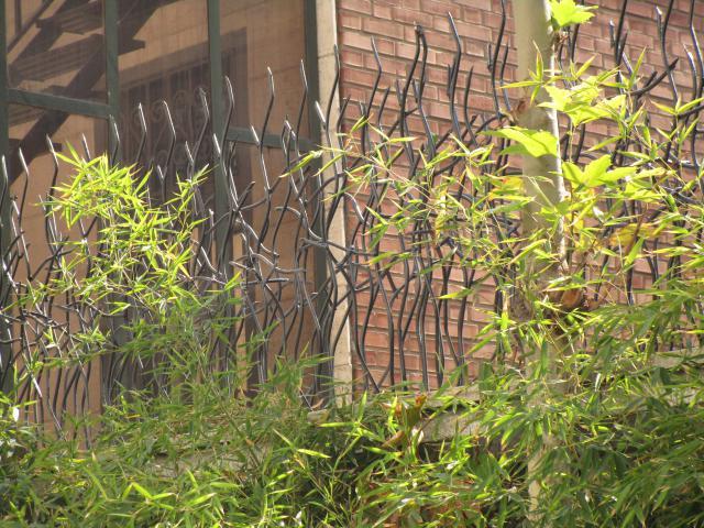حفاظ شاخ گوزنی از نمای کناری
